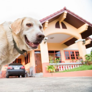 Courts treat animal companions as personal property, which means the owners must decide which of them gets Fido the dog or Rufus the cat.