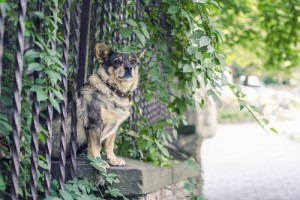 Identifying the best interests of a pet in a property division case ensures that it is properly cared for after a divorce is finalized.